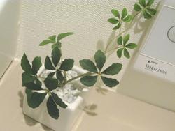 UDD触媒の観葉植物お取り寄せ♪