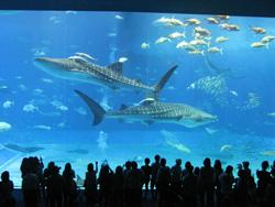 世界一ばかりの美ら海水族館