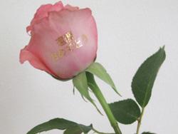 ローズレターでバラにメッセージでお祝いを!