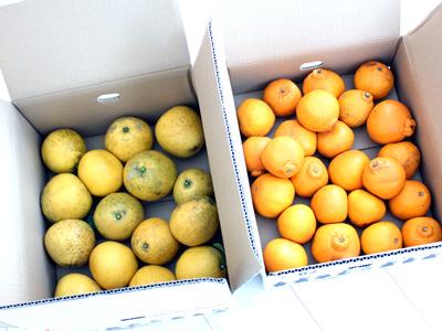 クマモンが届けてくれる甘~い柑橘フルーツ